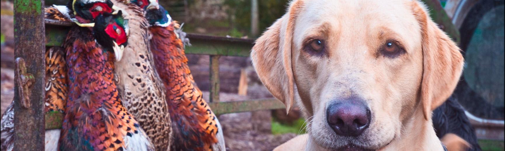 Pheasant Shooting Tips Ugbrooke Park
